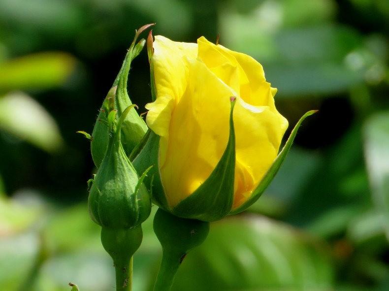 九月天的花----2_图1-13