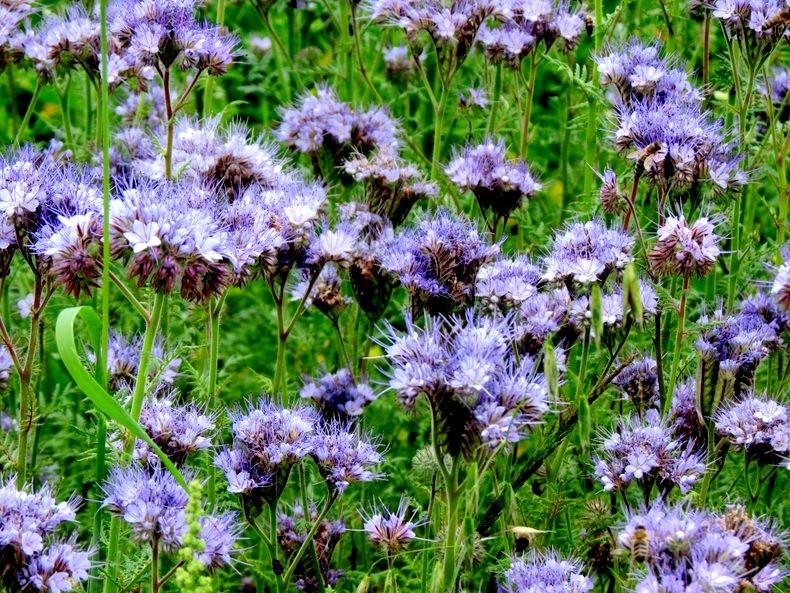 九月天的花----2_图1-15
