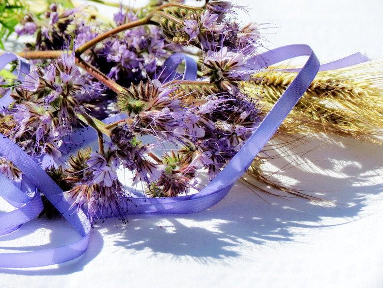 九月天的花----2_图1-16