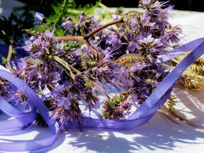 九月天的花----2_图1-17