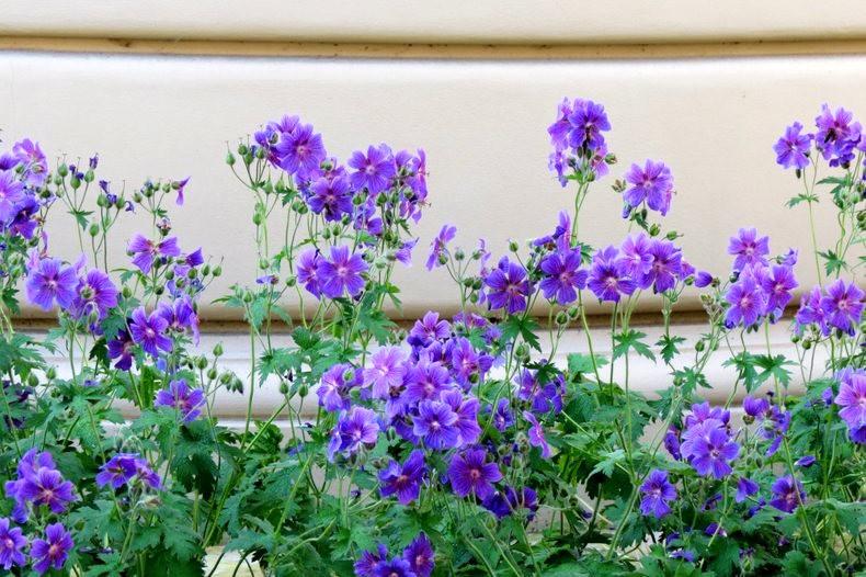 九月天的花----2_图1-20