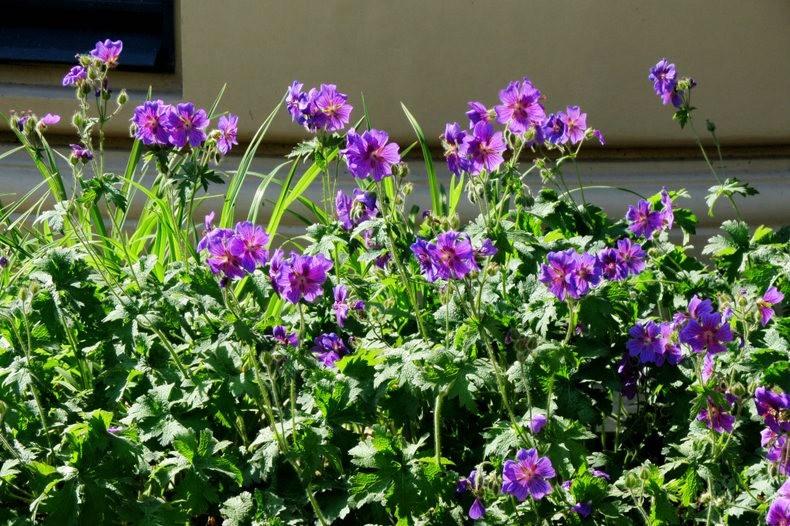 九月天的花----2_图1-21