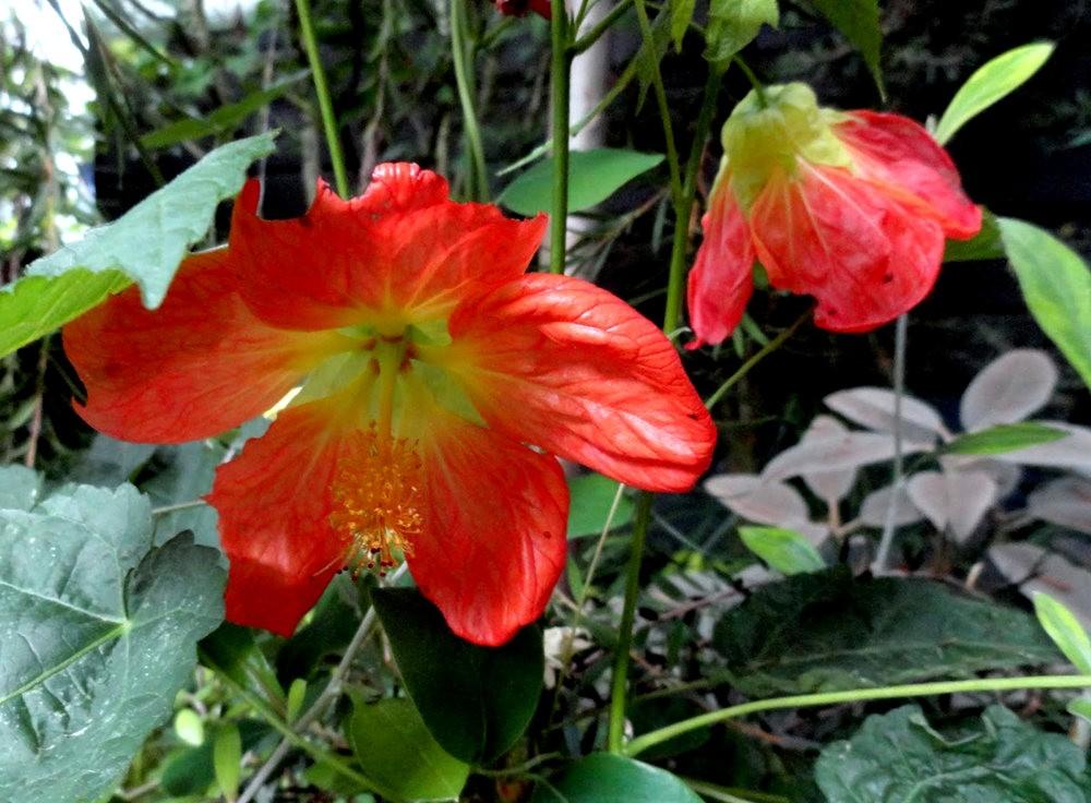 9月天的花---3_图1-1