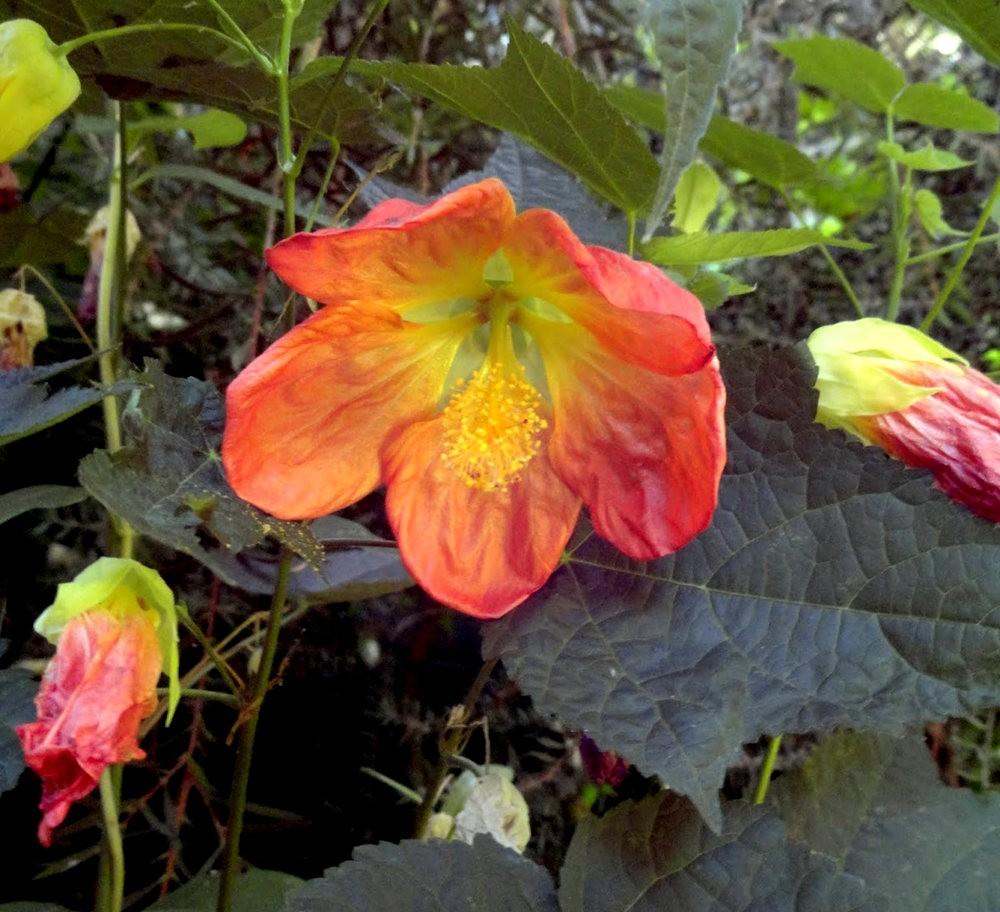 9月天的花---3_图1-2