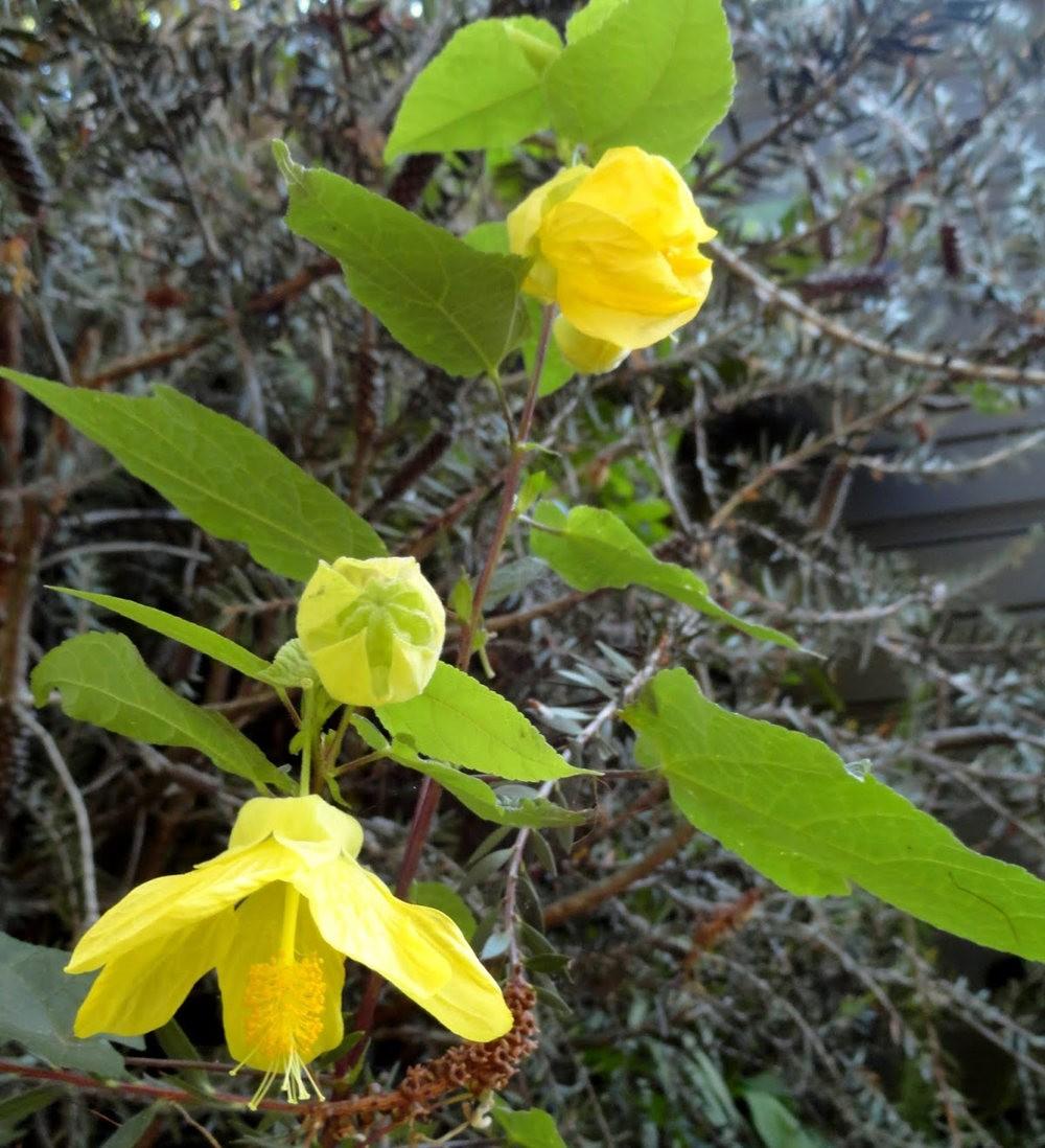 9月天的花---3_图1-3