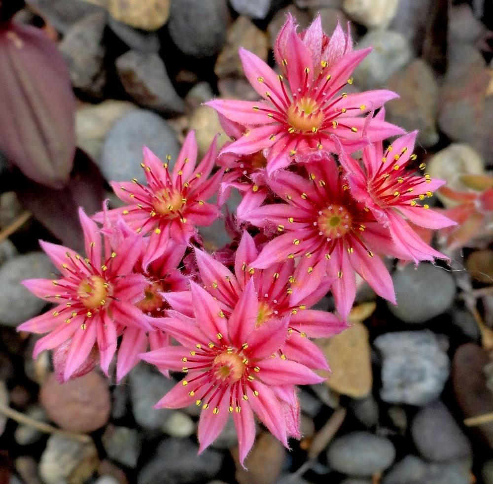9月天的花---3_图1-15