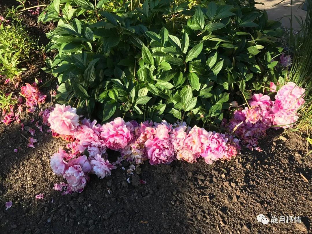 花季虽短,尚有来年。_图1-2