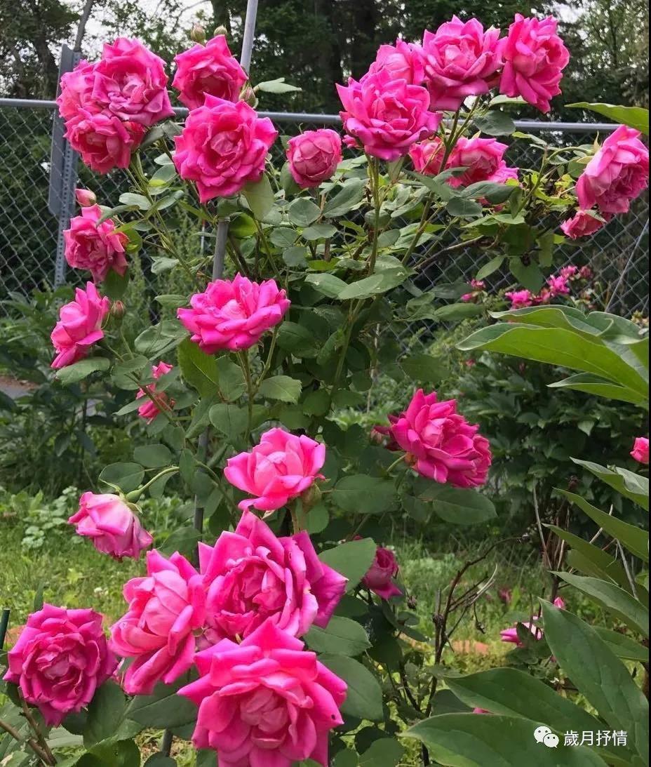 花季虽短,尚有来年。_图1-7