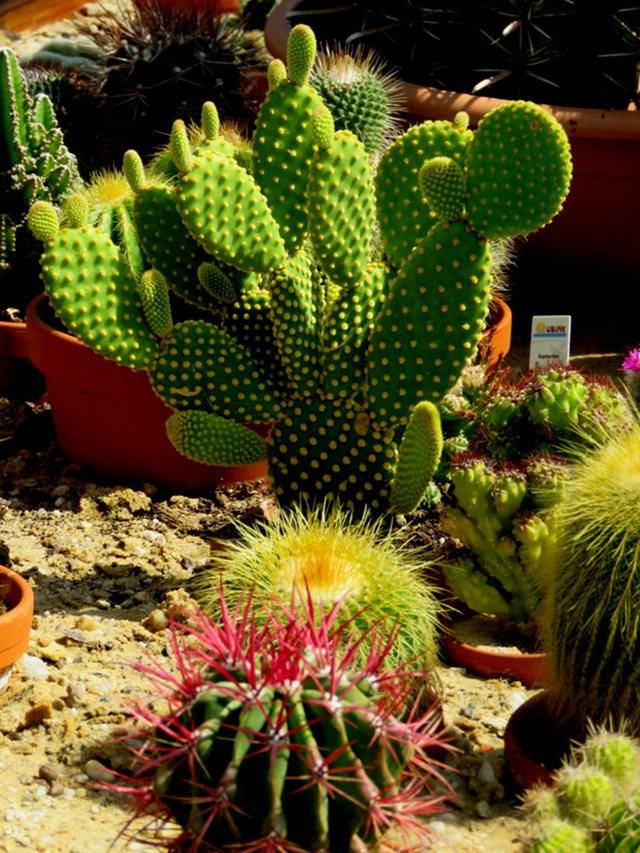 卡皮亚斯花园---2_图1-6