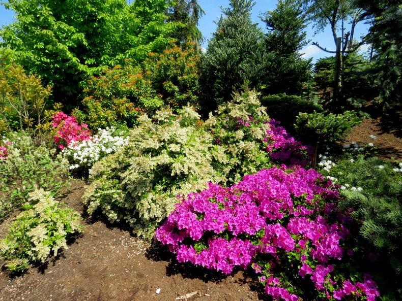 卡皮亚斯花园---2_图1-15