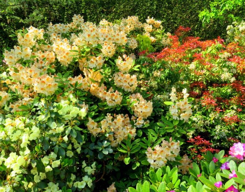 卡皮亚斯花园---2_图1-16