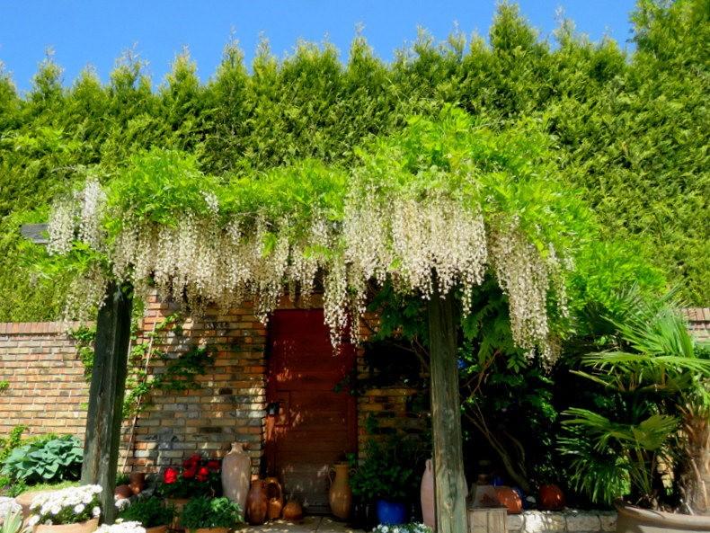 卡皮亚斯花园---2_图1-18