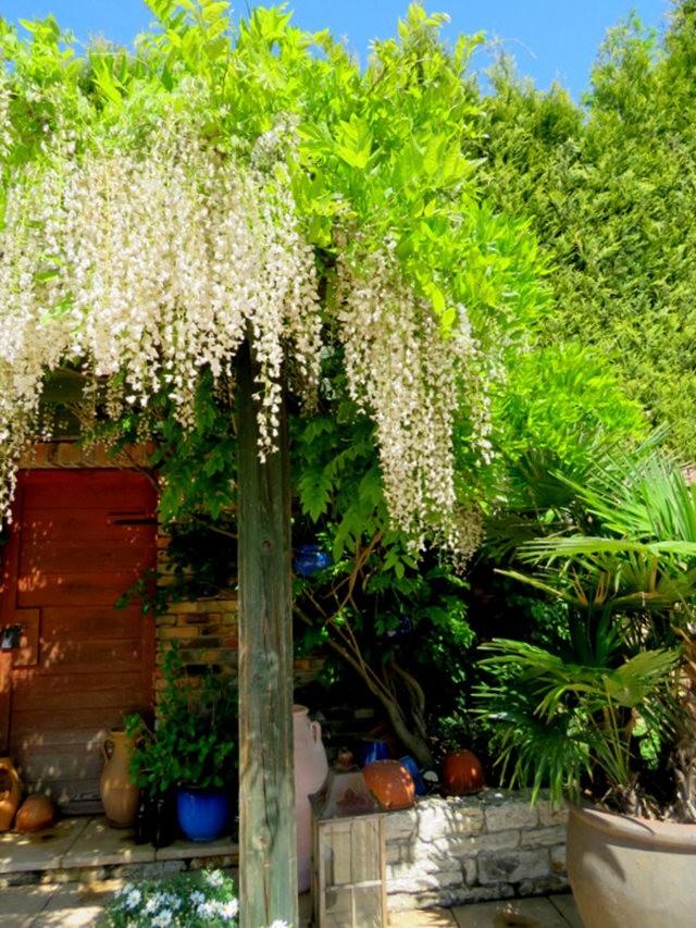 卡皮亚斯花园---2_图1-20