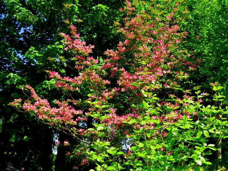 卡皮亚斯花园---2_图1-25