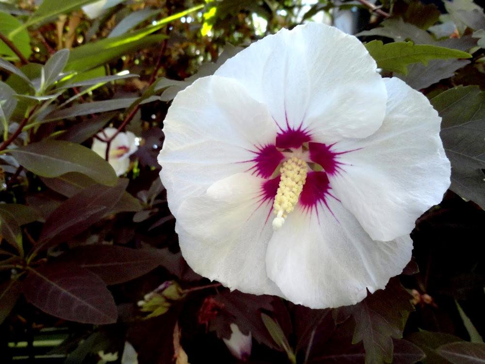 9月天的花---4_图1-2