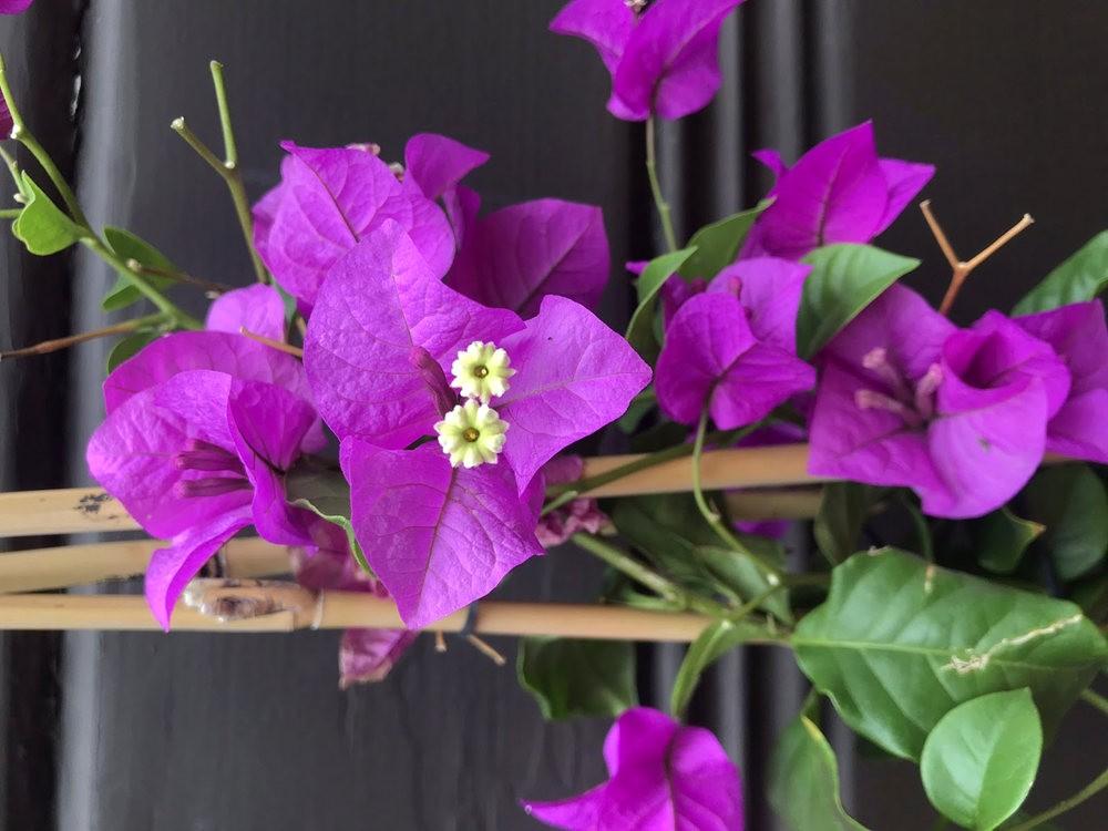 9月天的花---4_图1-4