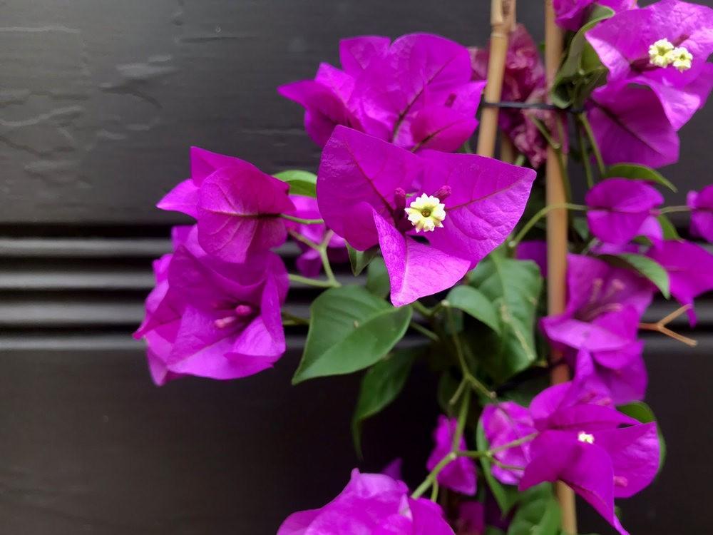 9月天的花---4_图1-5