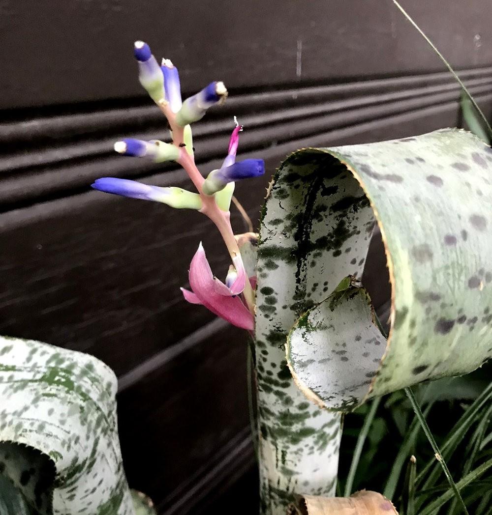 9月天的花---4_图1-15