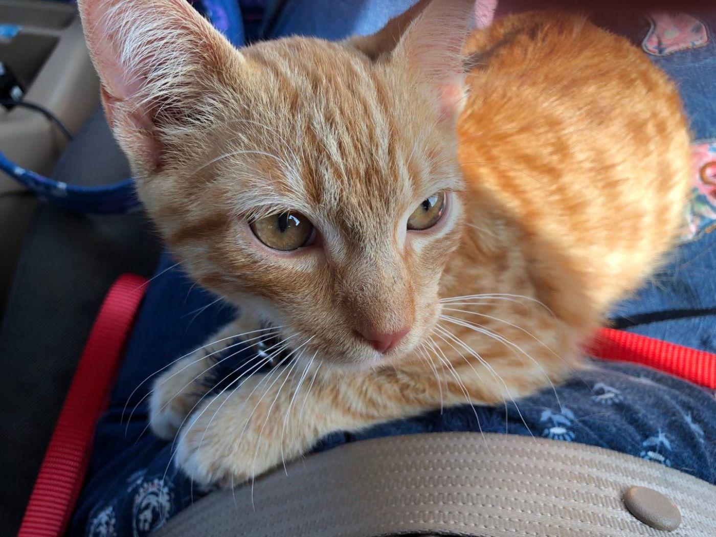 收养的小猫咪_图1-1