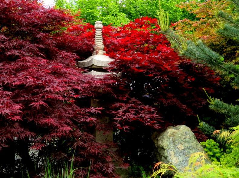 禅宗花园中的盆景树展览_图1-1