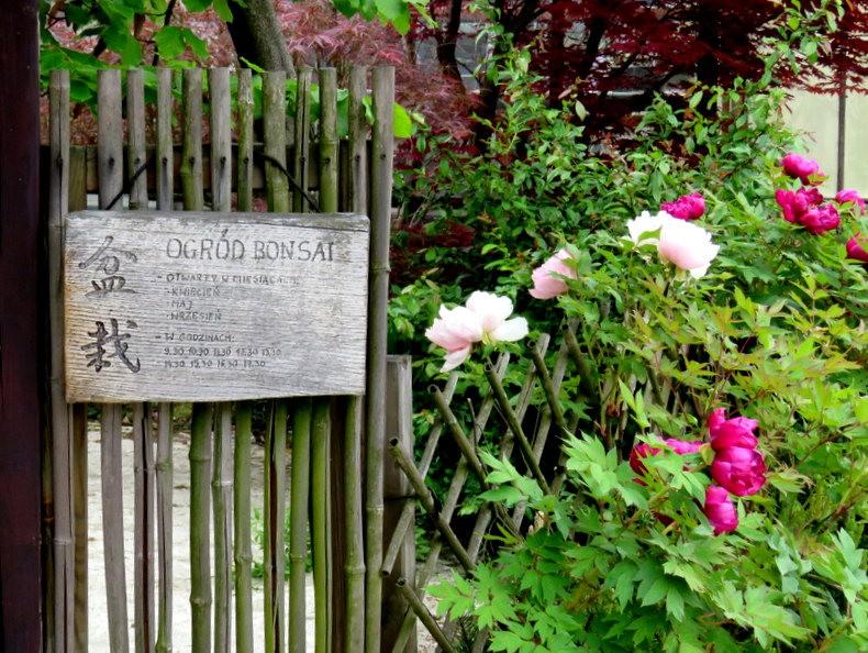 禅宗花园中的盆景树展览_图1-2