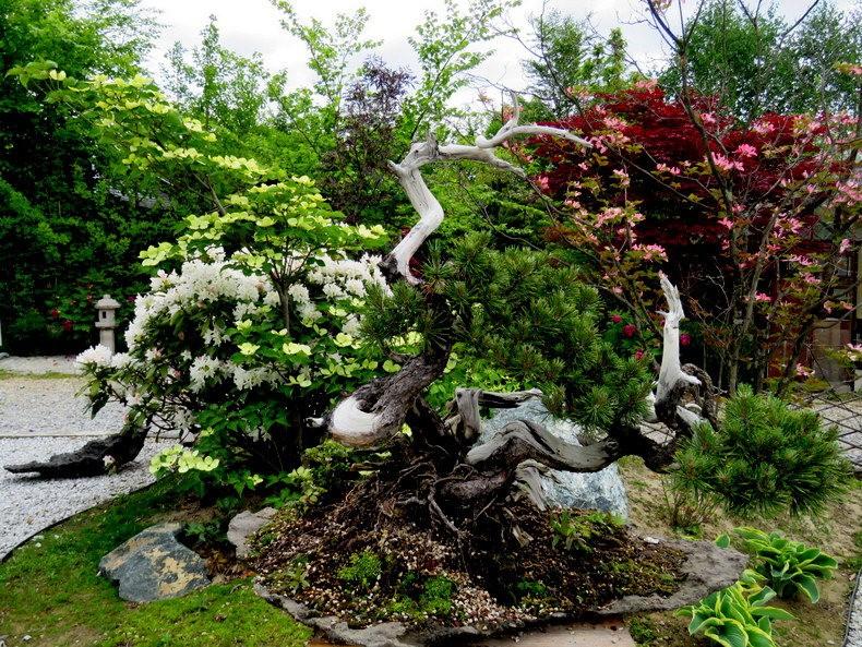 禅宗花园中的盆景树展览_图1-3