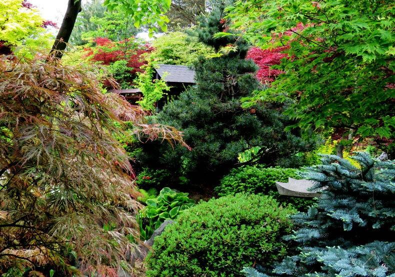 禅宗花园中的盆景树展览_图1-5
