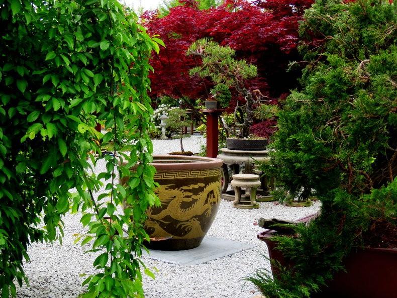 禅宗花园中的盆景树展览_图1-6