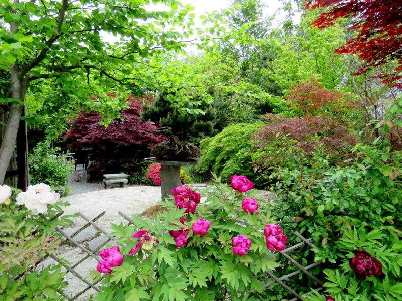 禅宗花园中的盆景树展览_图1-7