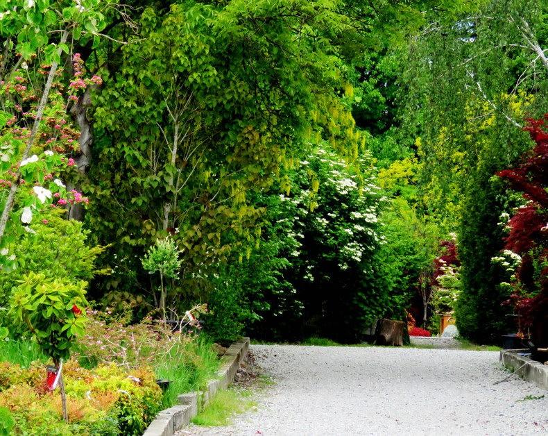 禅宗花园中的盆景树展览_图1-8