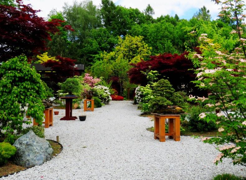 禅宗花园中的盆景树展览_图1-9
