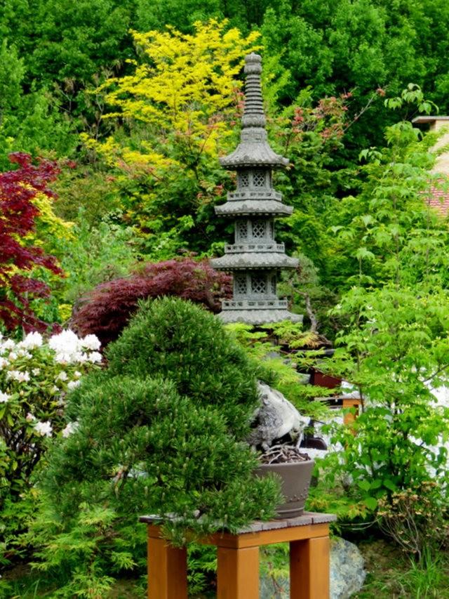 禅宗花园中的盆景树展览_图1-16