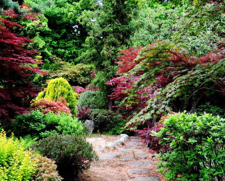 禅宗花园中的盆景树展览_图1-18