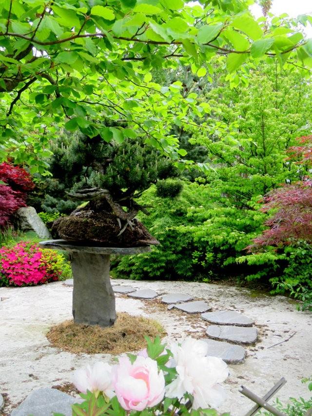 禅宗花园中的盆景树展览_图1-20