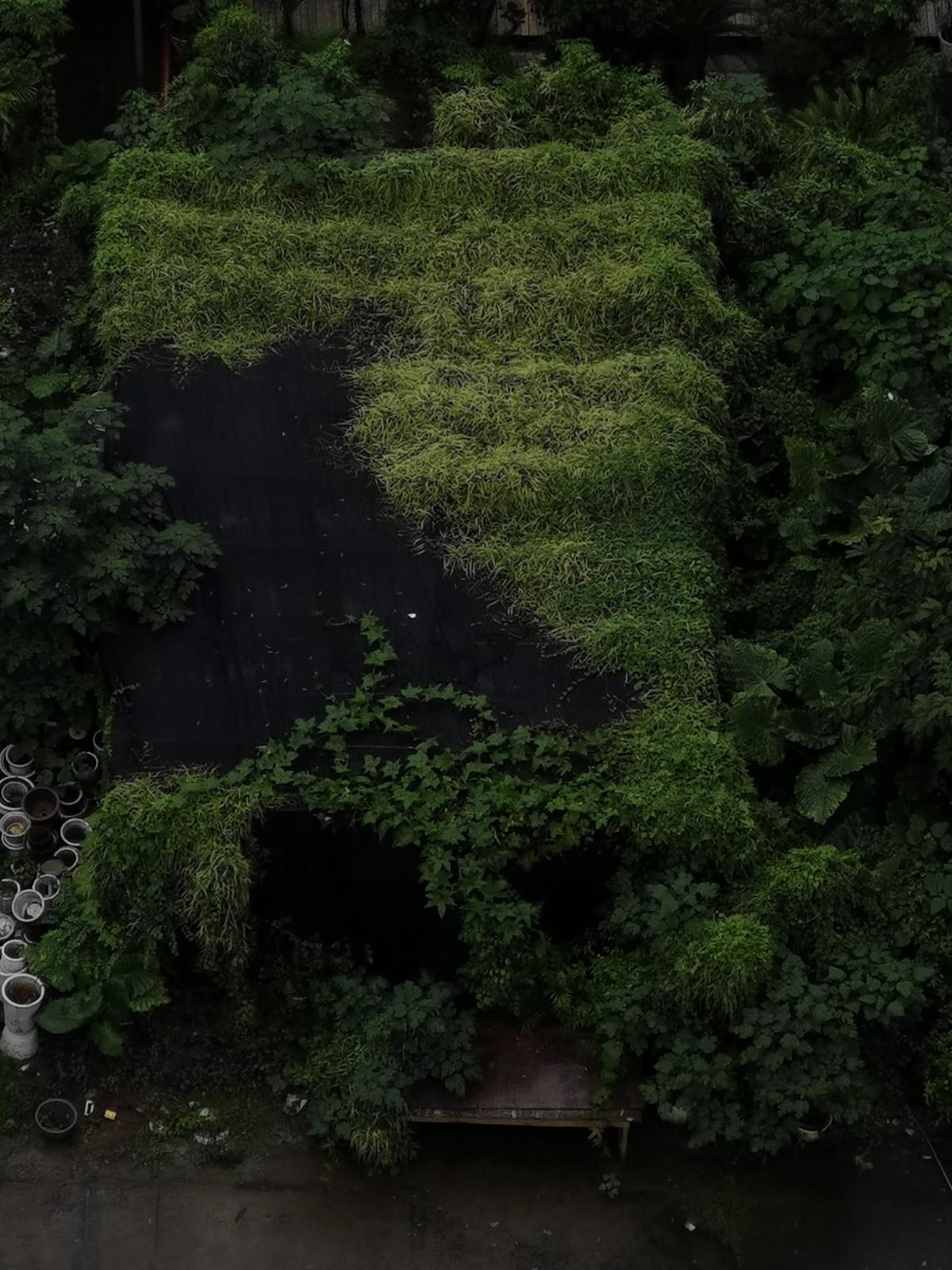 好想住进那被花草覆盖的小屋_图1-1