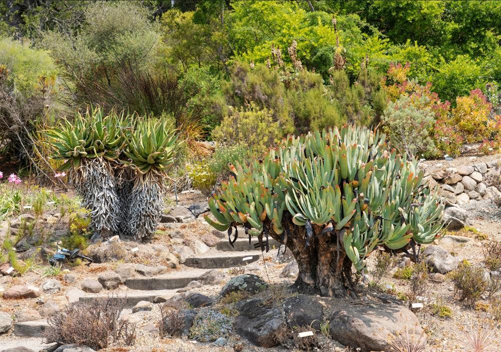 加州大学伯克利分校的植物园_图1-2