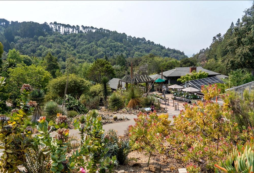 加州大学伯克利分校的植物园_图1-4
