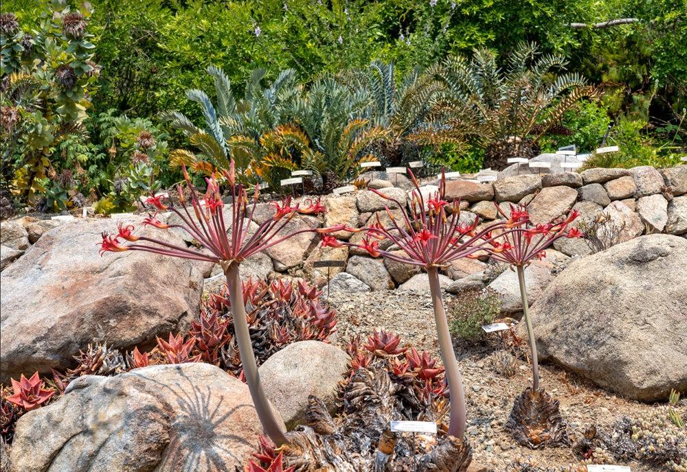 加州大学伯克利分校的植物园_图1-8