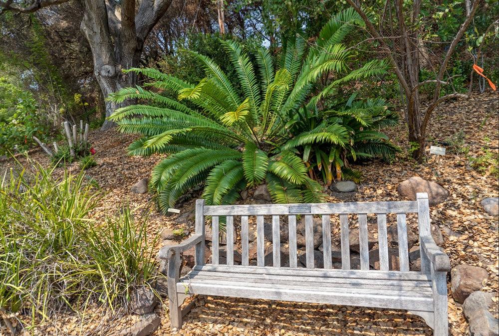 加州大学伯克利分校的植物园_图1-9