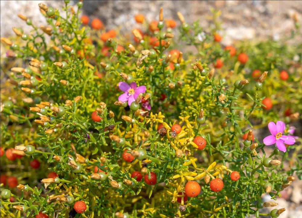 加州大学伯克利分校的植物园_图1-12