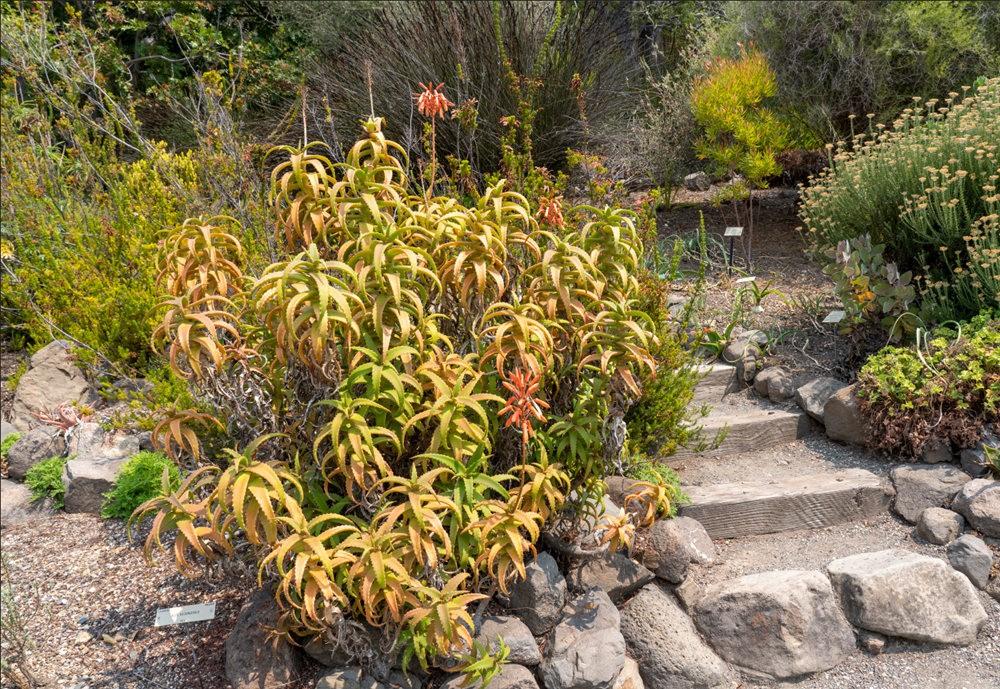 加州大学伯克利分校的植物园_图1-22
