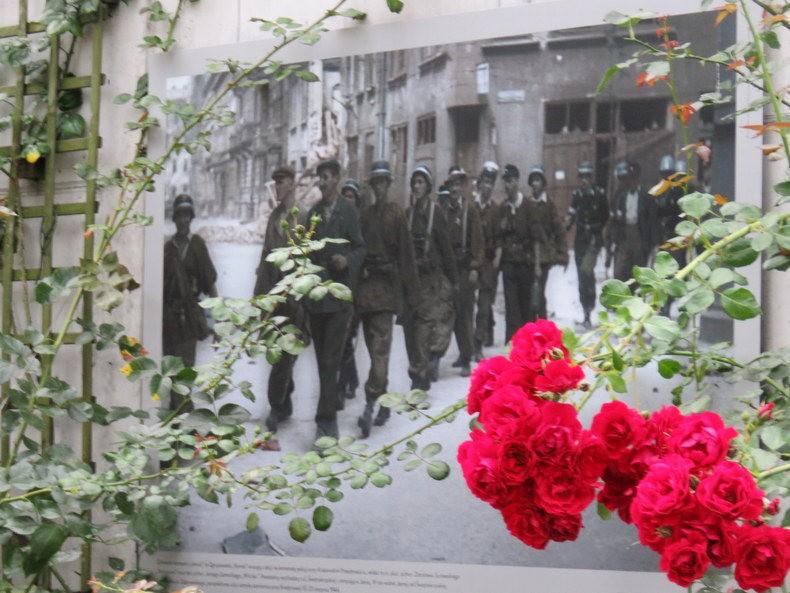 华沙起义博物馆的玫瑰园_图1-4