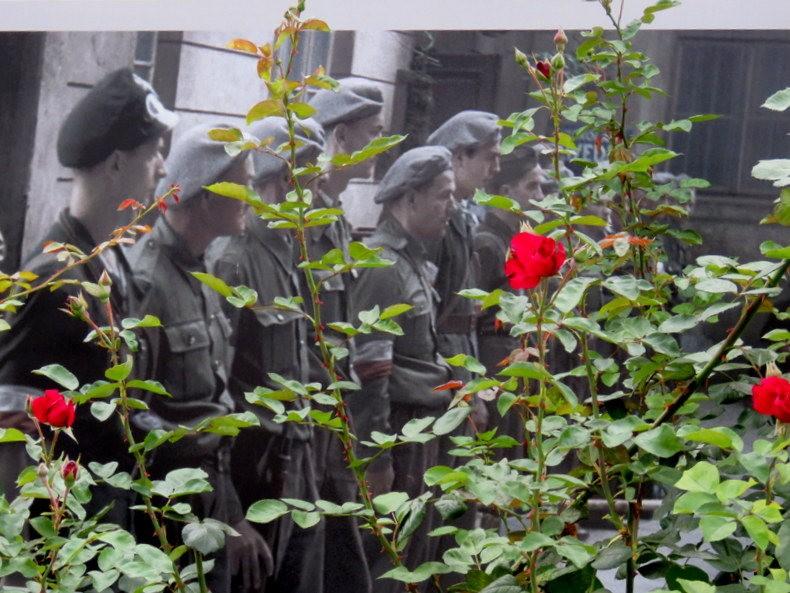 华沙起义博物馆的玫瑰园_图1-6