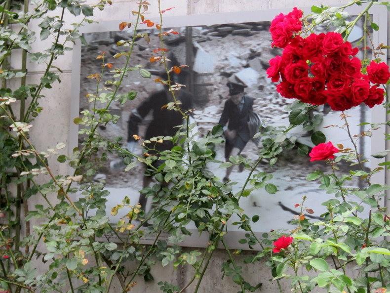 华沙起义博物馆的玫瑰园_图1-9