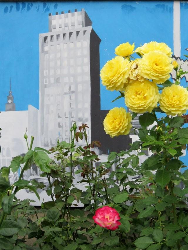 华沙起义博物馆的玫瑰园_图1-14