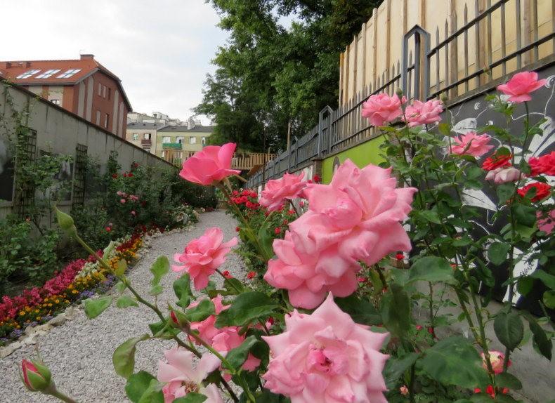 华沙起义博物馆的玫瑰园_图1-16