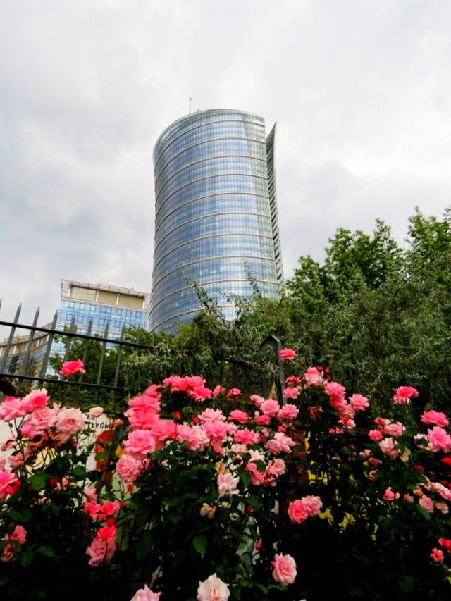 华沙起义博物馆的玫瑰园_图1-18