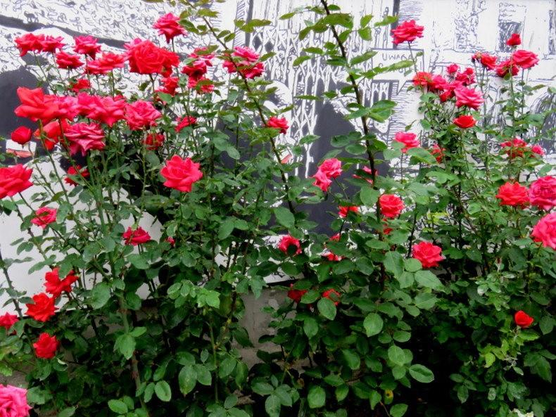 华沙起义博物馆的玫瑰园_图1-20