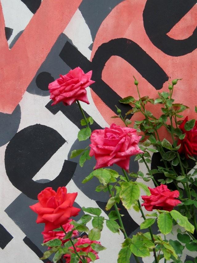 华沙起义博物馆的玫瑰园_图1-24