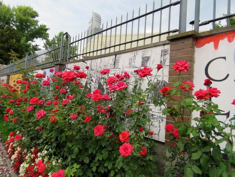 华沙起义博物馆的玫瑰园_图1-26